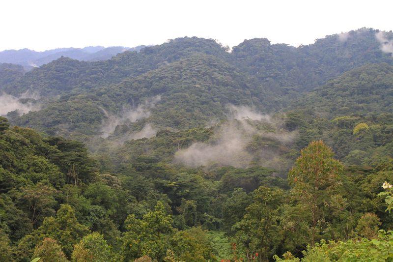 Beautiful Bwindi Forest-Uganda
