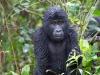 A gorilla throne