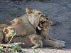 Tsaro Pride, Duba Plains, Botswana