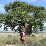 Boabab_Masai