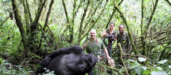 In the company of mountain gorillas, Bwindi Forest, Uganda