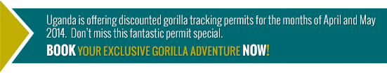 Book your gorilla tracking safari today