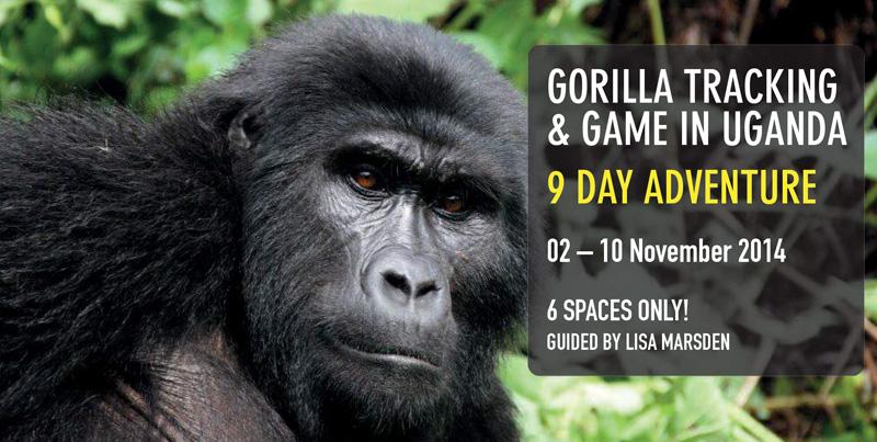 Gorilla-Tracking-Uganda-Nov2014